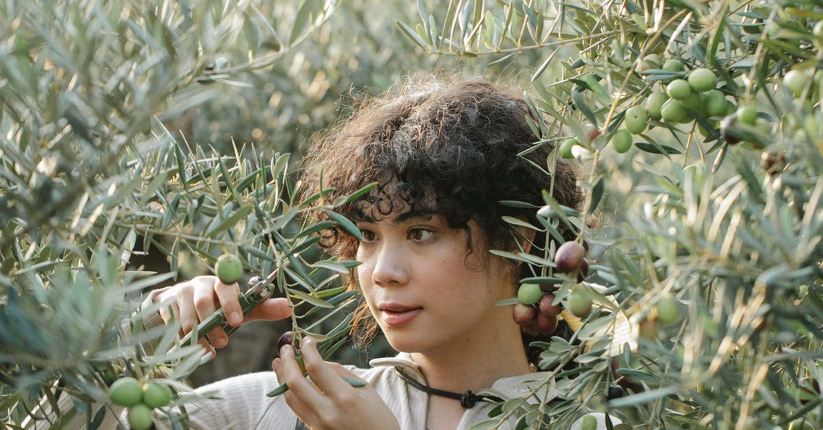 A young boy wearing a green plant