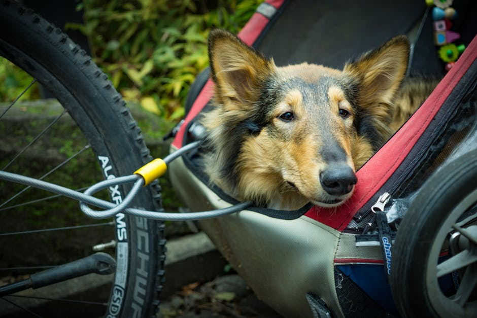 A dog sitting on a bicycle